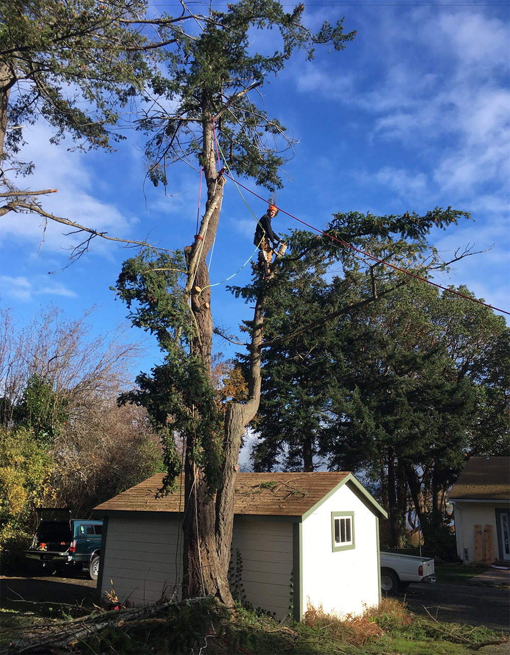 Deep Roots In Native Youth: Deep Roots Tree Service